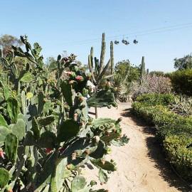 Dubai Creek Park - wzgórze kaktusowe