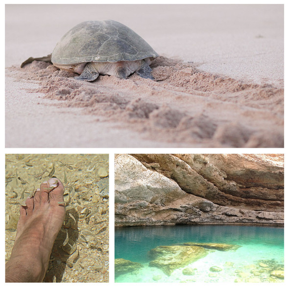 Oman, Ras Al Jinz - Turtle Watching