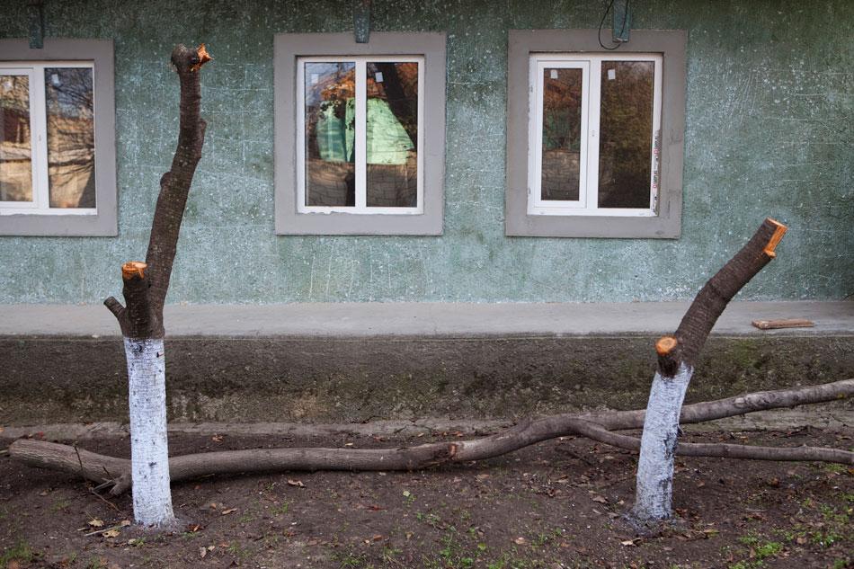 """""""Przycięte"""" drzewka"""