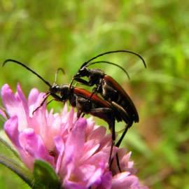 Beetles -- Photo by Krystyna Durtan