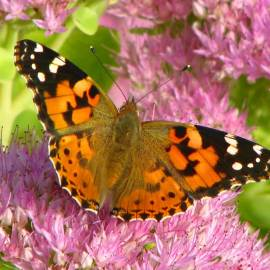 Butterfly -- Photo by Krystyna Durtan