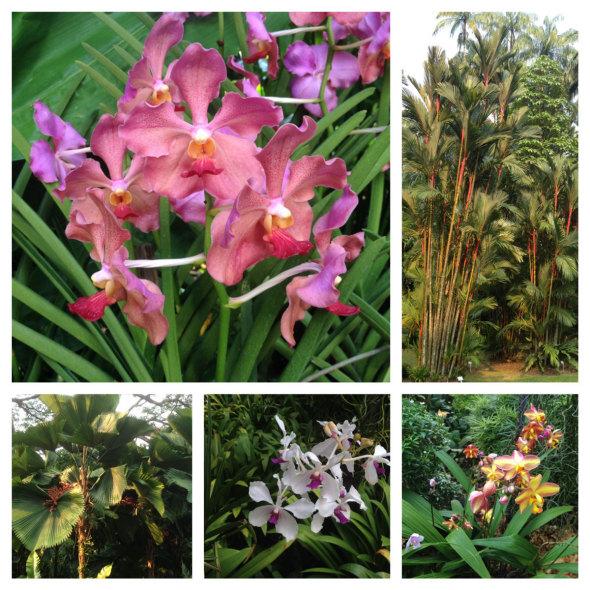 Orchid-Garden-Singapore