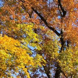 Polish Autumn -- Photo by Krystyna Durtan