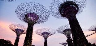 Singapur -- Super Drzewa