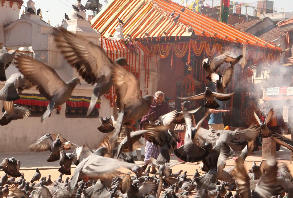 Pigeons by the Big Stupa in Kathmandu, Nepal